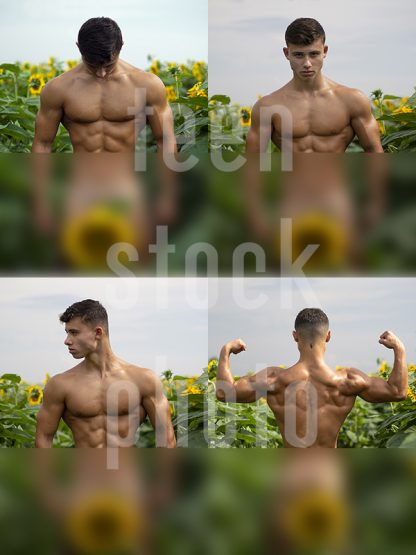Naked boy with a great body is photographed in sunflowers